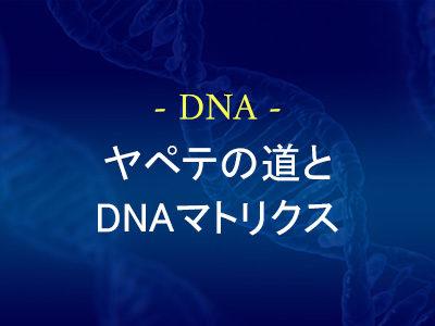 ヤペテの道とDNAマトリクス